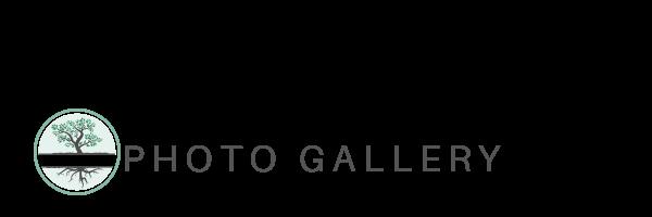 Cotati Property Dividers Photo Gallery