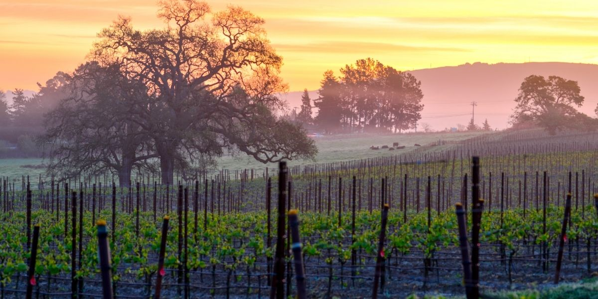 Sonoma County Featured Image