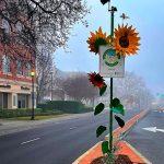Woodland Community Featured Image